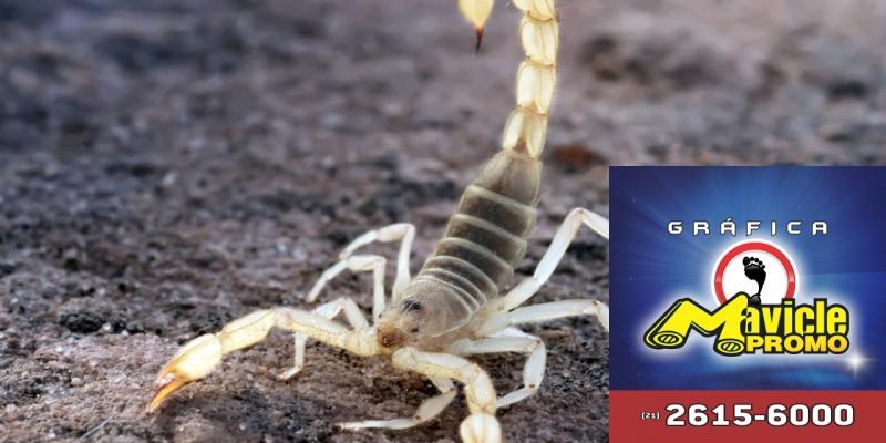 Infestação de escorpiões coloca o interior de SP em alerta   Imã de geladeira e Gráfica Mavicle Promo